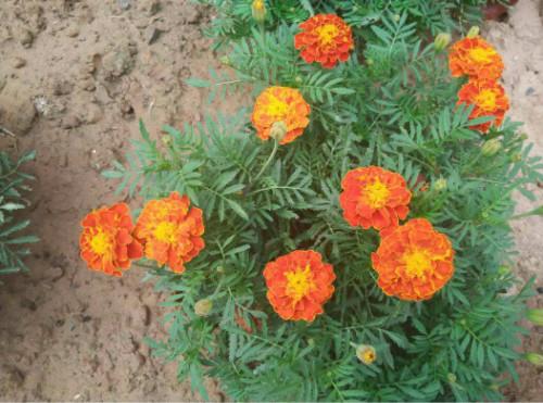 草坪草种子价格_种什么花利润最高 花卉生意利润怎么样 卖盆栽花的利润有多少