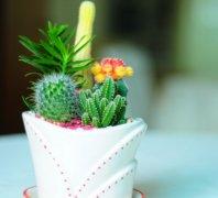 仙人掌开花是什么兆头好吗 仙人掌摆放